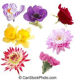 Selección de flores aisladas
