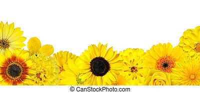 Selección de flores amarillas en la fila inferior aislada