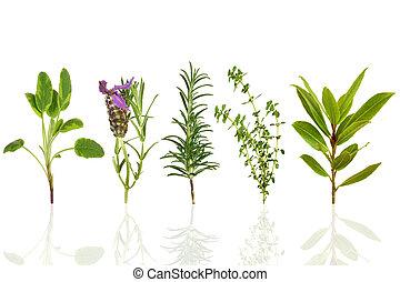 Selección de hojas de hierba