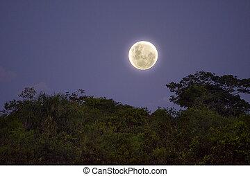 selva, llena, la, luna, en
