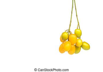 semilla, ramitas, neem, medicinal, encima, fondo blanco, fruits