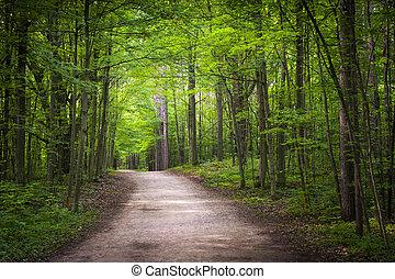 Senderismo en el bosque verde