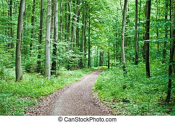 Senderismo en un bosque verde