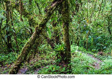 sendero, lluvioso, baru, estación, sendero de excursión, parque nacional, volcan, los, quetzales, durante, panam