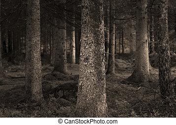 Sepia bosque