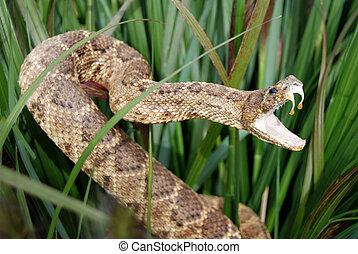 serpiente, furtivo