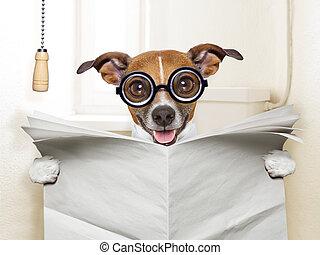 servicio, perro