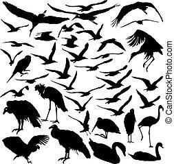 Set de aves vectoras