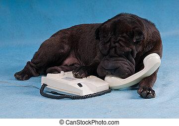 Shar-pei hablando por teléfono