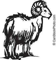 sheep, cuerno grande