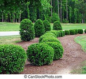 Shrubs y arbustos
