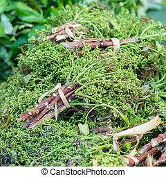 Siamese neem árbol en el mercado local,