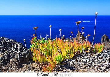 sicilia, pantelleria