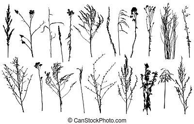 silhouettes., salvaje, plantas, malas hierbas, vector, illustration., colección