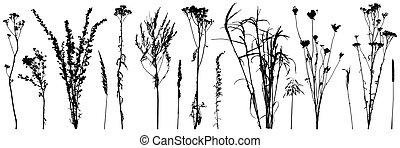 silhouettes., salvaje, plantas, malas hierbas, vector, illustration., conjunto