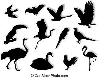 silueta, aves