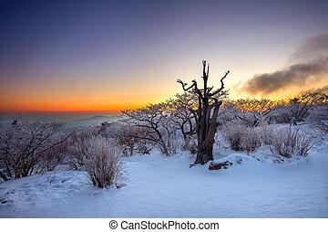 Silueta de árboles muertos, hermoso paisaje al amanecer en el parque nacional de Deogyusan en invierno, Sur Corea.