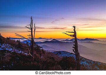 Silueta de árboles muertos, hermoso paisaje al atardecer en el parque nacional de Deogyusan en invierno, Sur Corea.