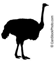 Silueta de avestruz