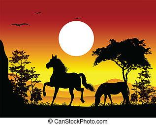 Silueta de caballo de belleza