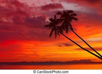 Silueta de palmeras al atardecer