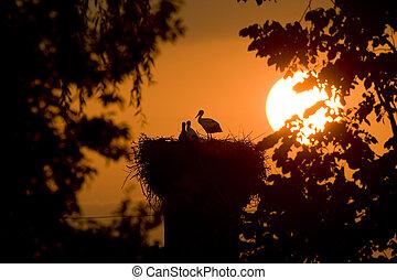 Silueta de un Storks en el nido