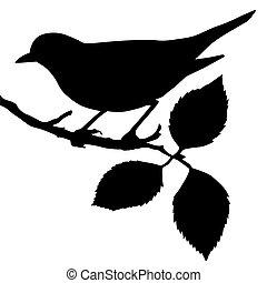 Silueta del pájaro en rama