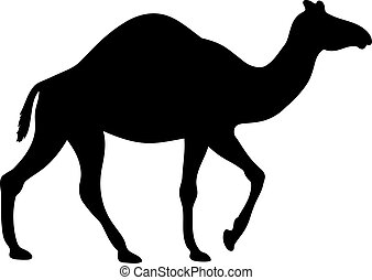 silueta, desierto, vector, camel., ilustración, negro, animal