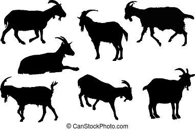 silueta, goat