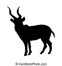 silueta, kudu, antílope