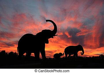 silueta, ocaso, elefantes