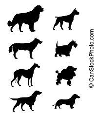 silueta, perros
