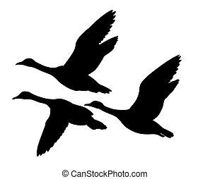 silueta, vuelo, patos, vector, plano de fondo, blanco