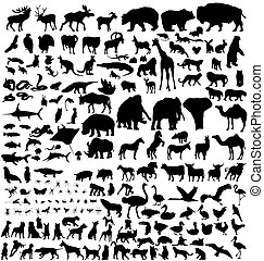 siluetas, animal, colección