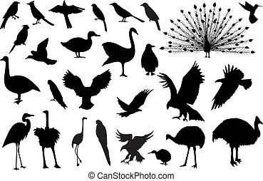 Siluetas de 27 pájaros