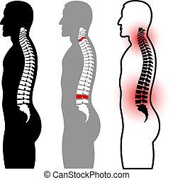 Siluetas de la columna vertebral humana