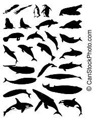 Siluetas de mamíferos marinos. Una ilustración del vector