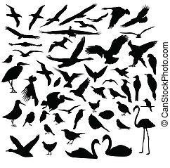 Siluetas de pájaro