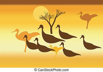 Siluetas de pájaros salvajes al atardecer