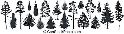 Siluetas de pino. Abetos de bosque Evergreen y abetos formas negras, plantillas de árboles silvestres. Árboles del bosque vector