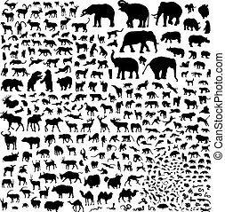 siluetas, fauna, asia