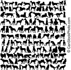 siluetas, perro, centenares