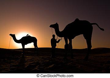 siluetas, salida del sol, camello