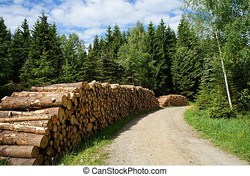 silvicultura, erzgebirge