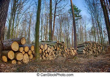 silvicultura, silvicultor, bosque, árboles