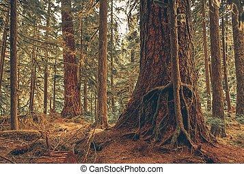 Simbiosis del bosque misterioso