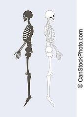 Sistema esqueleto del vector de ilustración del cuerpo humano
