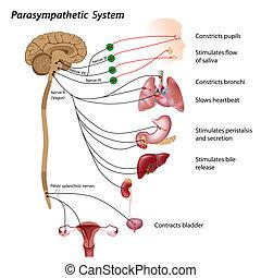 Sistema parasitético