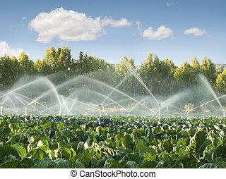 Sistemas de riego en un huerto