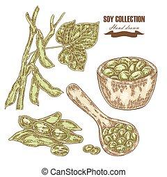 soja, dibujado, mano, soja, planta